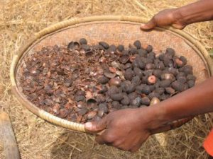 basket of shea nuts